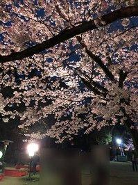sakura2.jpegのサムネイル画像